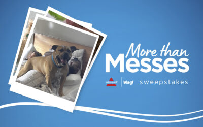 Bissell and Wag Team Up for Pet Care Sweepstakes